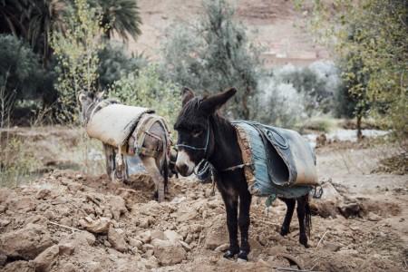 2015 WEB Morocco - 609