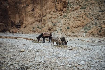 2015 WEB Morocco - 629