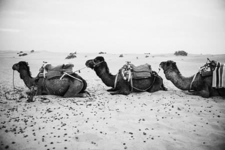 2015 WEB Morocco - 642